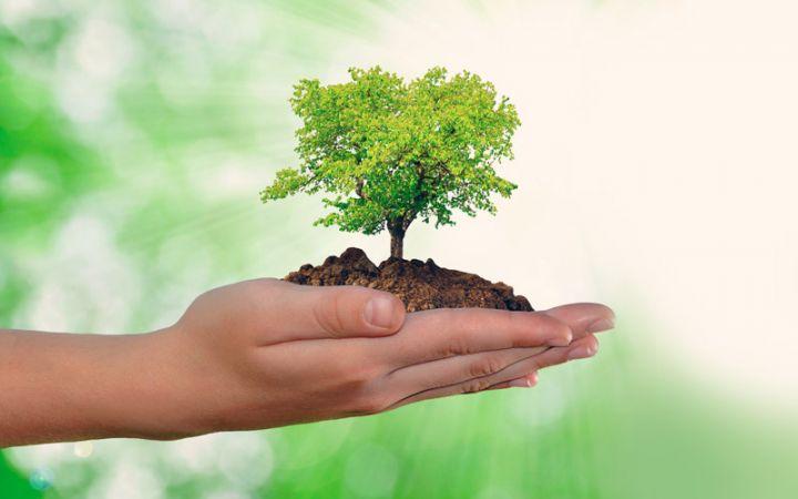importância do meio ambiente